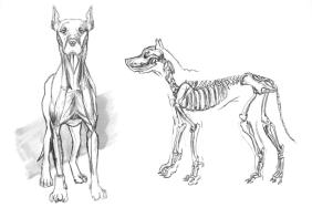 Anatomy-Study5