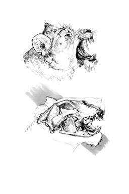 Anatomy-Study4